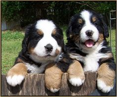 Look at the paws on these guys!!