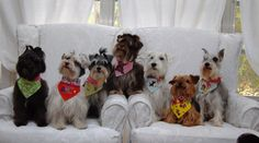 Dog Scarf Just for Fun by MozziesCloset on Etsy