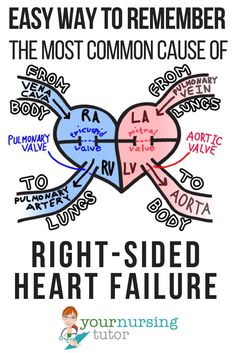 Easily Remember the Most Common Cause of Right-Sided Heart Failure ⋆ Your Nursing Tutor Cardiac Nursing, Pharmacology Nursing, Nursing Degree, Nursing Career, Nursing Tips, Nursing Programs, Funny Nursing, Lpn Programs, Nursing Process