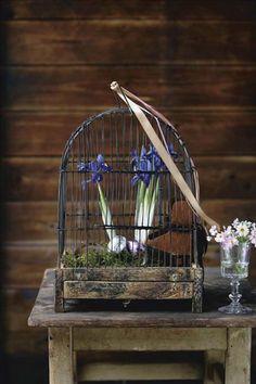 Iris, mossa och glansiga fågelägg  i en gammal fågelbur. Primulor  i glaset.