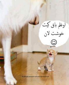 Islamic Wallpaper, Writing, Cats, Animals, Animais, Gatos, Animales, Kitty Cats, Animaux