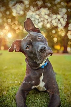 Top Ten – Bokeh » Photography Marketing and Business Tips for Pet Photographers – Hair of the Dog #petphotography