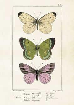ST Vintage Flowers 'Poster 3 Butterflies 35 x 50 cm' | A3 - 29,7 x 42 cm | Petite Louise
