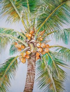 Coconut tree by Jelly Starnes. Maple Tree Tattoos, Pine Tree Tattoo, Watercolor Trees, Watercolor Paintings, Watercolour, Coconut Tree Drawing, Make A Family Tree, Fruit Painting, Garden Painting