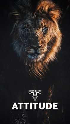 Hd Wallpaper Quotes, Beast Wallpaper, Motivational Quotes Wallpaper, Lion Wallpaper, Wallpapers, Mobile Wallpaper, Motivational Board, Dark Wallpaper, Motivational Pictures