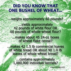 Did you know that one bushel of wheat did all of this?  Friday's Fun Ag Fact  #wheat #agriculture Credit: ProAg.com