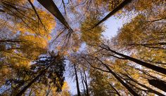 Trees by Michal Vávra on 500px