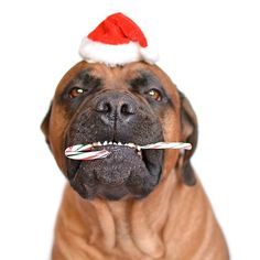 We Can't Get Enough of These Cute Christmas Cats and Dogs: We never really need an excuse to dress up our pets, so Christmas is as good a time as any to wrangle our furry friends into Santa hats, reindeer antlers, and even Christmas lights.