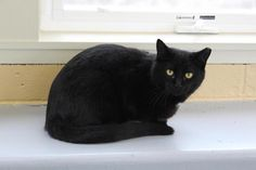 Mel/Domestic Short Hair • Young • Male • Small Action For Animals Inc. Humane Society Latrobe, PA