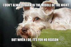 I don't always bark in the middle of the night,,, But When I do, it's for a Reason ;) White miniature schnauzer!!!