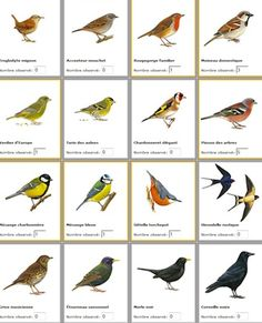 Ordinary Birds of Ile de France - Mary Martinez Animals Of The World, Animals For Kids, Homemade Bird Feeders, Bird Poster, Butterfly House, Australian Birds, Wild Creatures, Humming Bird Feeders, Backyard Birds