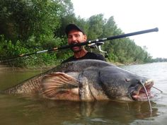 wels catfish 2.3m 90kg caught by Yuri Grisendi with POLE&LINE EQUES 9ft 3pcs