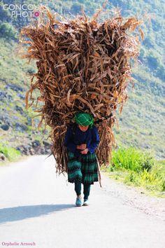 À la région montagneuse au Vietnam, on rencontre facilement l'image des femmes d'ethnie minoritaire même les petites enfants qui portent sur leurs dos des lourds fagots de bois de chauffage
