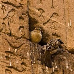 """One of the local Arabic phrases refers to the ancient Egyptian hieroglyphs as """"the alphabet of the birds"""" - possibly due to the large number of hierolglyphs which depicts birds."""" via Antonis Kalantzis FB page. Beautiful Birds, Animals Beautiful, Cute Animals, Ancient Art, Ancient Egypt, Foto Art, Cute Friends, Egyptian Art, Nature Pictures"""