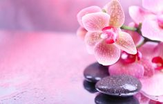 Wallpaper spa stones, beads, flowers, orchid, spa stones, droplets, flowers