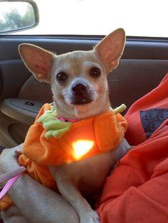 Honey Bunny is a Pumpkin...