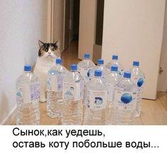 Сынок, оставь коту воды