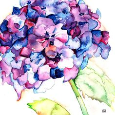 hydrangea watercolor - Google Search