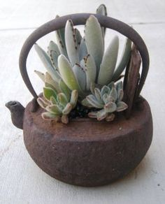 Teapot full of succulents
