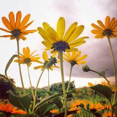 #Goodmorning ☻☻☻ #朝の1枚  One taken in the morningღ 『 #Flowerpower 』 #sun - @phantastic420 | Webstagram