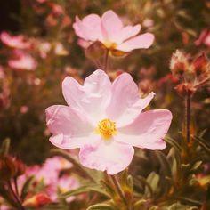 Instagram Posts, Plants, Plant, Planting, Planets