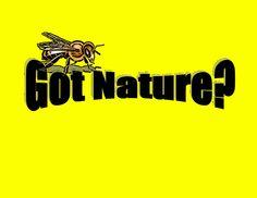 Got Nature? Proverbs 4 7, Humble Bee, Natural News, King Solomon, Nature, Naturaleza, Nature Illustration, Off Grid, Natural