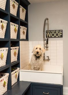 Laundry room for vertical spaces pinterest dog washing station learn how to install a dog washing station in your donald gardner dream home solutioingenieria Gallery