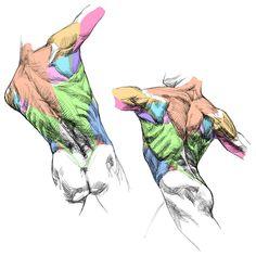 Human Anatomy Drawing, Human Body Anatomy, Manga Drawing, Figure Drawing, Body Reference Drawing, Anatomy Reference, Art Reference Poses, Anatomy Back, Anatomy Study