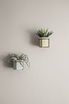 This Plant holders by Danish Design House, Ferm Living are designed to be mounted to the walls and spread a little extra greenness in your home. Wall Mounted Plant Holder, Small Plant Stand, Empty Wall Spaces, Small Plants, Plant Wall, Danish Design, Home Improvement Projects, Interior Inspiration, Ss16
