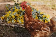 Dancing Blossom florals Florals, Dancing, Chicken, Studio, Animals, Floral, Animales, Dance, Animaux