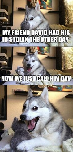 Bad Pun Dog | MY FRIEND DAVID HAD HIS ID STOLEN THE OTHER DAY NOW WE JUST CALL…