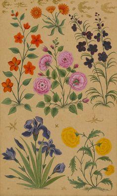 Muhammad Khan, Flower study, Dara Shikoh, c. 1633.