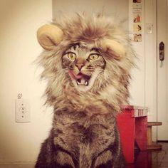 Cansei de ser gato | #canseidesergato