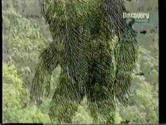 Rock Apes – Vietnam Bigfoot reports   Bigfoot NOW!