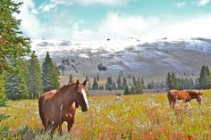"Idaho, Montana, and WyomingVisitor numbers drop beginning in September each year and continue to progressively slow until the snow coaches begin their winter travels in December. ""It's my favorite time of year in the park,"" says Kipp Saille of Rockin' HK Outfitters, who has been running horse-packing trips in Yellowstone's backcountry for 17 years. By early November, most roads in the park close, save for one through the Lamar Valley, a popular wintering ground for wildlife. Autumn weather…"