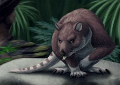 Daily Paleo Art Month #3: Ekaltadeta A marsupial related to the potorids (edit: actually that should be the musky rat-kangaroo; thank you noddytheornithopod!), Ekaltadeta lived in northern Australia between 25 and 15 million years ago. Only known from skull material, it was probably roughly the size of a typical modern wallaby – about 80cm long (31in) and weighing around 10-15kg (22-33lbs). Ekaltadeta's lower incisors were very long, protruding and almost dagger-like. Along with some some…