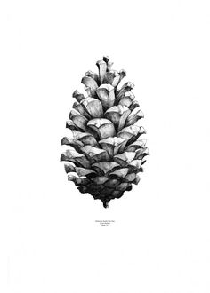Form us with love, Pine cone White by Paper Collective   Poster from theposterclub.com