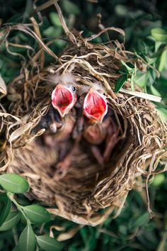 Shop 2 Spring Baby Birds in Nest, Wildlife Photography Postcard created by Aadam_Photography. Spring Birds, Spring Nature, Nature Animals, Baby Animals, Wildlife Photography, Animal Photography, Bird Poster, Animal Posters, All Birds