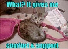 Comfort and support...awe!