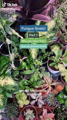 Indoor Garden, Garden Plants, Indoor Plants, House Plants, Household Plants, Inside Plants, Plant Aesthetic, House Plant Care, Bedroom Plants