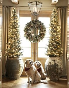 Love this! Not sure if it's the great holiday decorations or the cute dogs!