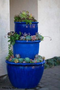 "Shared by Claudia Robles 2/19/15 to group ""Blue Bottle Trees...."""