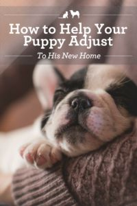 3632c9c1e07 How to Help Your New Puppy Adjust to His New Home.