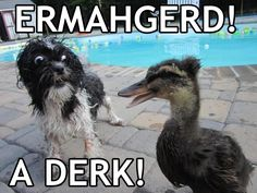 Ermahgerd a Derk  You know this dog is terrified of seeing a duck in real life. Watch out puppy!