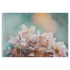 Hydrangea Floral Photograph, Ethereal, Pastel. Purple, Pink, Real,... (£12) ❤ liked on Polyvore featuring home, home decor, wall art, flower home decor, purple wall art, flower wall art, flower stem and purple flower wall art
