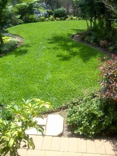 Well manicured kikuyu grass