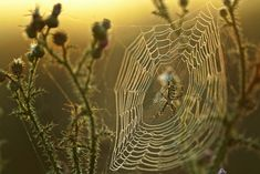 Pókhálóim - csendszirom.qwqw.hu Spider Species, 10 Interesting Facts, Amazing Facts, Garden Spider, Itsy Bitsy Spider, Weird News, Amazing Spider, Natural World, Pretty Cool