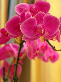 Explain more Art digital exotic flower orchid sexy remarkable