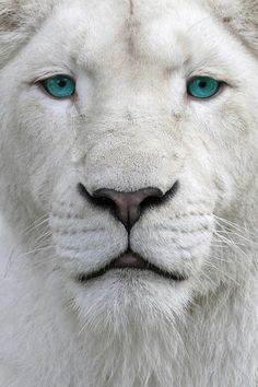I want to travel and see beautiful, wild animals.