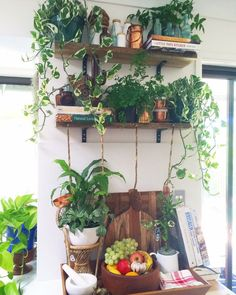 I've been working & planning all morning. I just came into the kitchen to grab a drink & HELLO! Plants are seriously taking over here! All of my copper pretties & some of our vintage apothecary bottle collection are being completely over run!! SEND HALP!
